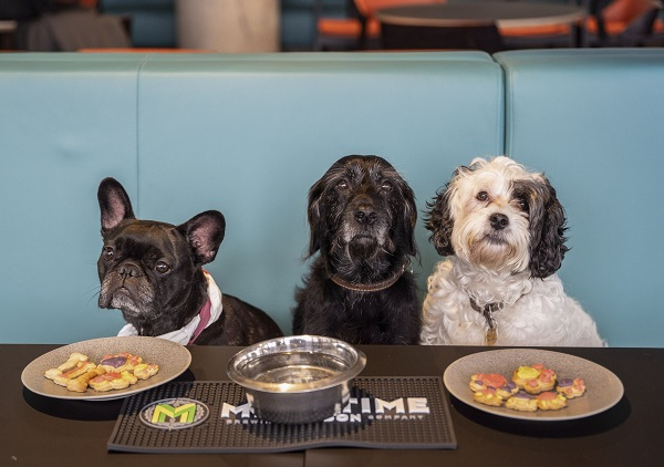 Dogs Welcome at Newly Reopened Riverside Studios